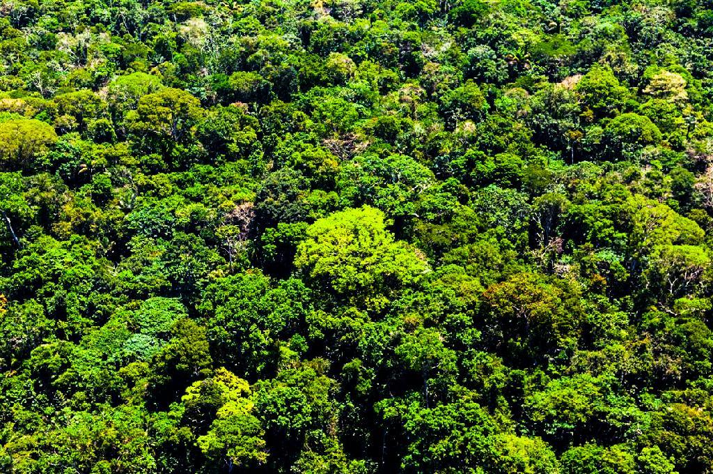 floresta_amazônica